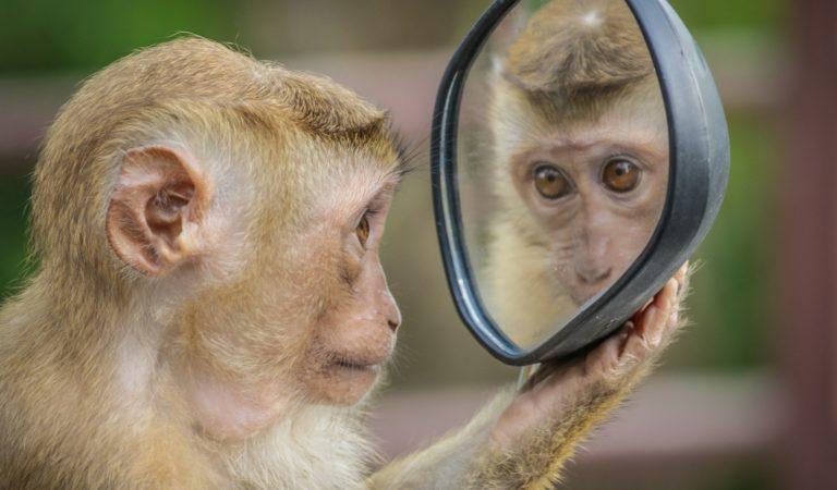 목차 : 원숭이 이디엄 모음(Monkey Idioms)