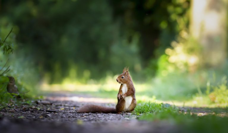 """""""Even a Blind Squirrel Can Find a nut once in a while"""" 소 뒷걸음 치다가 쥐 잡는다?"""